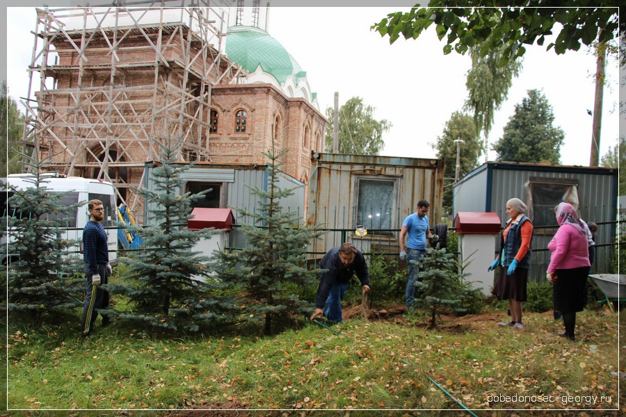 Живая изгородь из новых елочек к новому храму